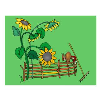 Sunflower Garden Postcard