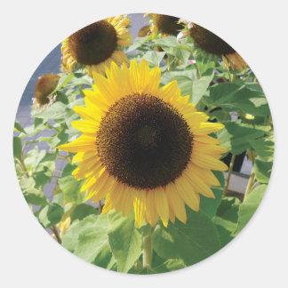 Sunflower Girasol Photo Classic Round Sticker