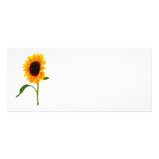 Sunflower Gives a Hand Full Color Rack Card