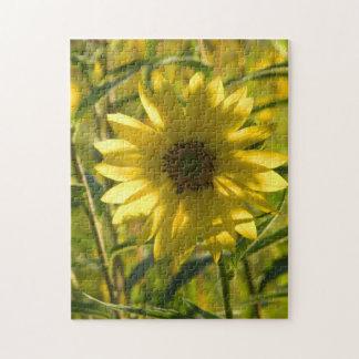 Sunflower Glow Puzzle