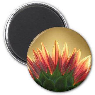 Sunflower gold ~ Magnet