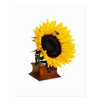 Sunflower gramophone postcard