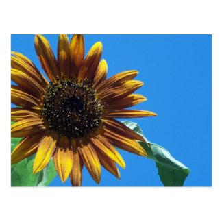 Sunflower Greetings Postcard