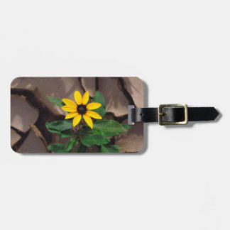 Sunflower growing from Cracked Mud Tag For Bags