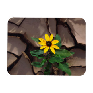 Sunflower growing from Cracked Mud Magnet