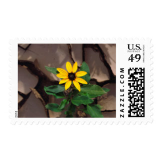 Sunflower growing from Cracked Mud Postage