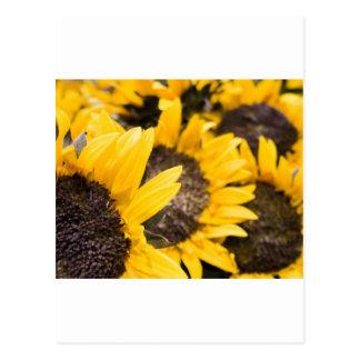 Sunflower heaven postcards