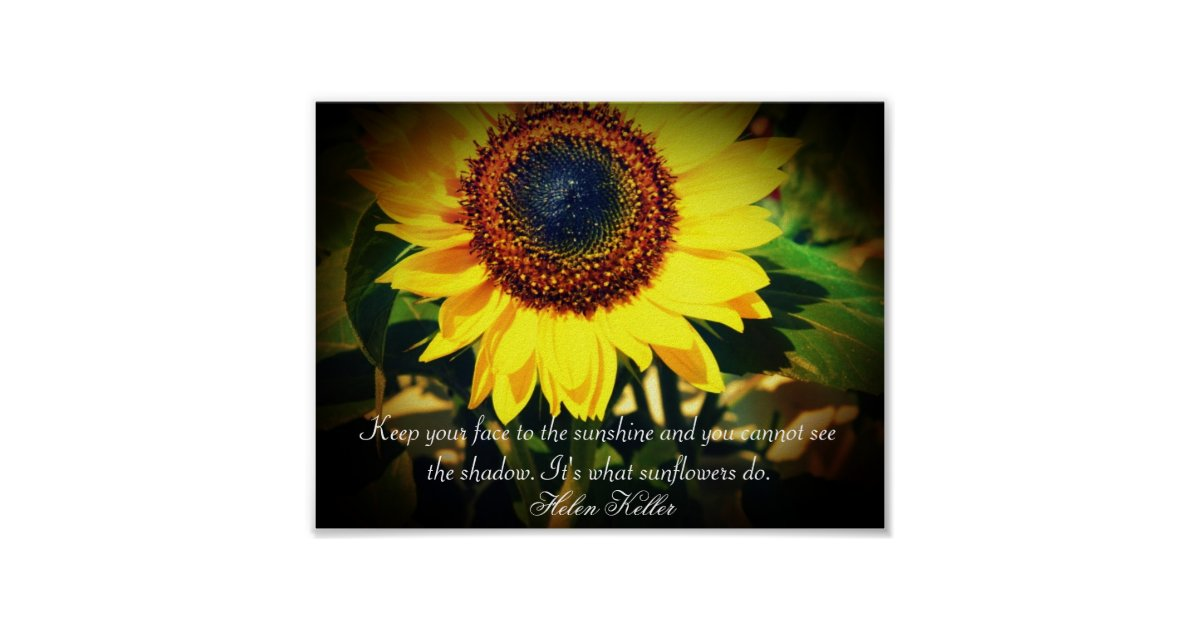Sunflower Helen Keller Quote Uplifting Poster Zazzle