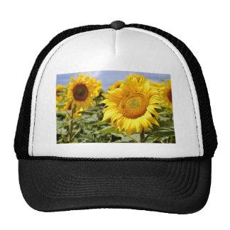 sunflower,Helianthus annuus,Helianthus,flower,sing Trucker Hat