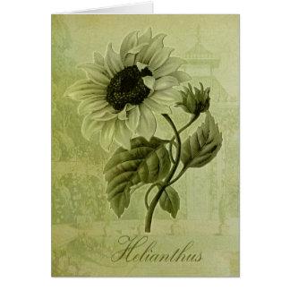 Sunflower Helianthus Greeting Card