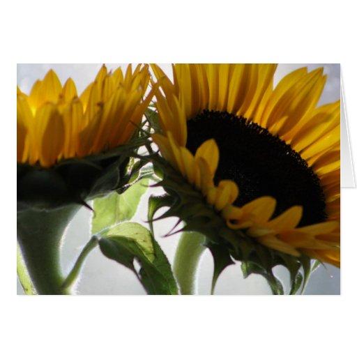 sunflower ii cards