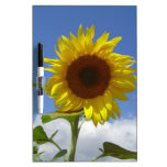 Sunflower in a Blue Sky Dry Erase White Board