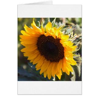 Sunflower in August Card