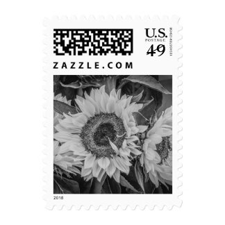 Sunflower in Black and White Postage Stamp