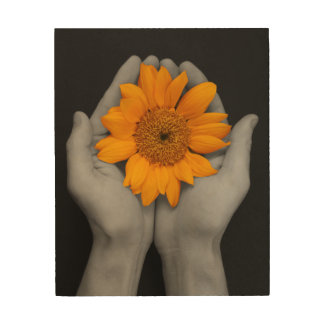 Sunflower in cupped hands - black background wood wall decor