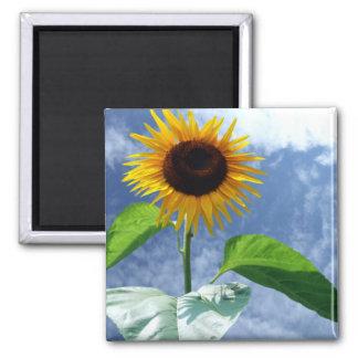Sunflower In Full Bloom Magnet