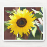 Sunflower in Full Bloom Mouse Pad