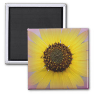 Sunflower in Pink Magnet