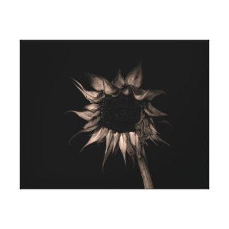 Sunflower in Sepia Fine Art Photograph Unique Cool Canvas Print
