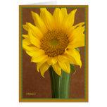 Sunflower in stem green vase greeting cards