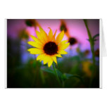Sunflower in Sunset Greeting Card