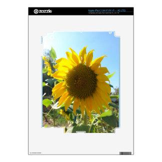 Sunflower in the garden iPad 3 skin