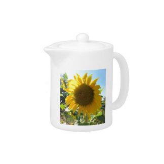 Sunflower in the garden teapot