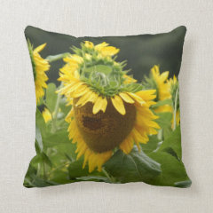 Sunflower in the Rain Throw Pillows