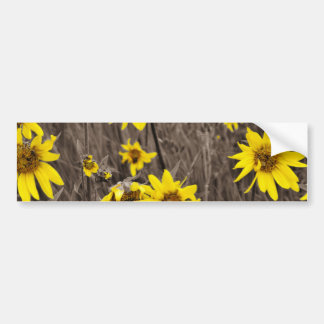 Sunflower in the Rocky Mountain Bumper Sticker