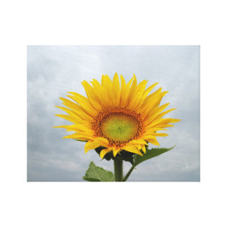 Sunflower in the Sky Canvas Prints