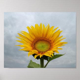 Sunflower in the Sky Print