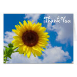 Sunflower in the Sky, Thank You Greeting Cards