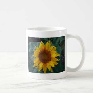 Sunflower in the Spring Classic White Coffee Mug