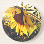 Sunflower in the sun beverage coasters