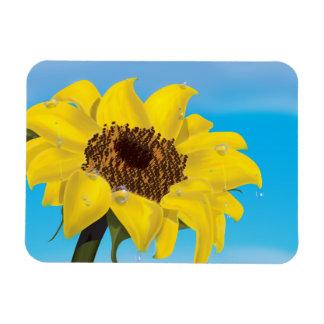 Sunflower in the Sunshine Magnet