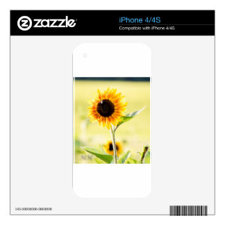 sunflower iPhone 4 decal
