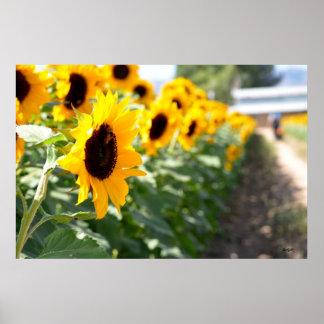 Sunflower Lane Poster