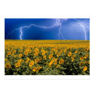 Sunflower Lightning Field Postcards