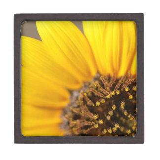 Sunflower Macro Photography Premium Trinket Box