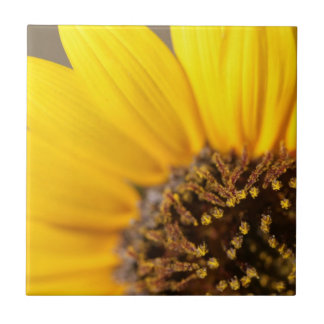 Sunflower Macro Photography Tile
