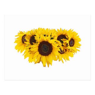 Sunflower Medallion Postcard