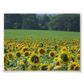 Sunflower Mob Poster