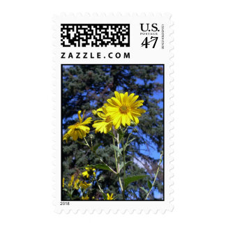 sunflower n pine postage
