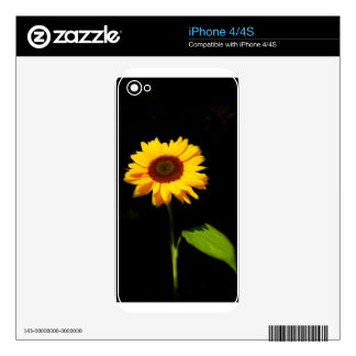 Sunflower on Black Background Decals For The iPhone 4S