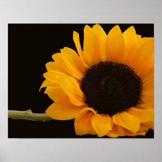 Sunflower on Black Poster