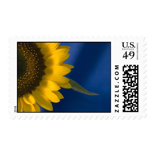 Sunflower on Blue Postage Stamp