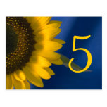 Sunflower on Blue Table Number Post Cards