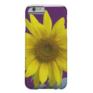 Sunflower on Purple iPhone 6 Case