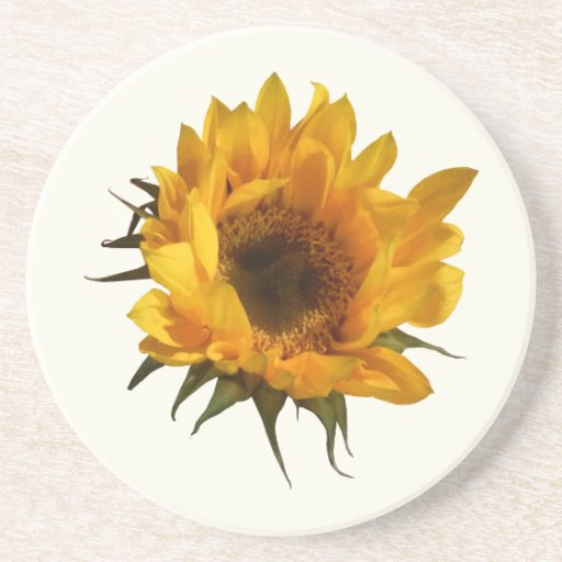 Sunflower Opening Drink Coasters
