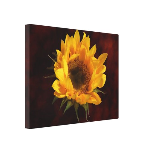 Sunflower Opening Gallery Wrapped Canvas